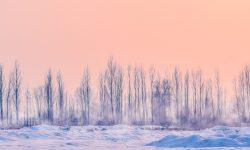 Pastel Background